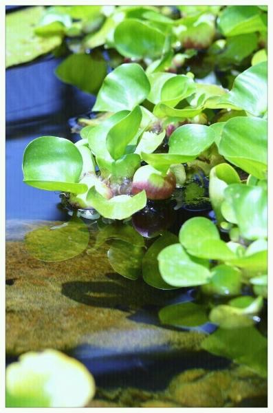 small-pond-greens-242684_10150638105560174_723090173_19136566_1089755_o