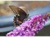 butterfly-243510_10150638125375174_723090173_19136969_589967_o