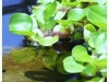 small-pond-greens-242684_10150638105560174_723090173_19136566_1089755_o