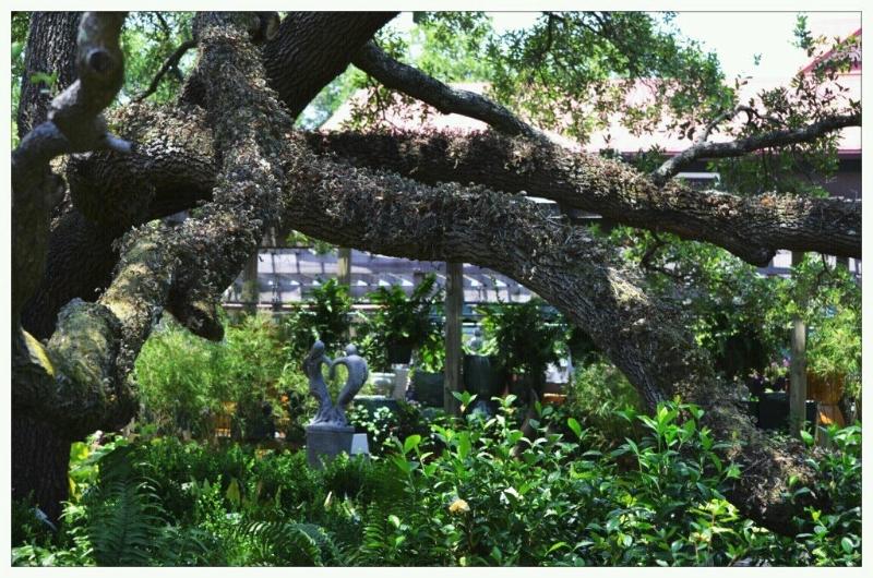 view-of-tree-over-garden-center259439_10150638125085174_723090173_19136960_6504243_o